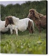 Three Ponies Canvas Print