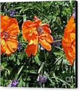 Three Poppies Canvas Print by Claudette Bujold-Poirier