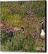 Three Quiet Canada Geese Canvas Print by Susan Wiedmann