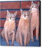 Three Tan Cats Canvas Print