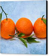 Three Tangerines Canvas Print by Alexander Senin