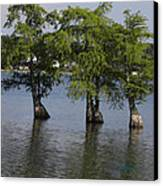 Three Trees Canvas Print by Cim Paddock