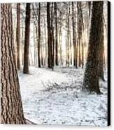 Thru The Pines Canvas Print by Andrea Galiffi