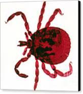 Tick Canvas Print by Perennou Nuridsany