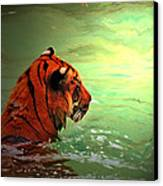 Tiger Canvas Print by Daniele Smith