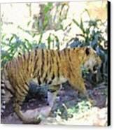 Tiger In Crayon Canvas Print by Judy  Waller