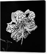 Tiger Lily In Black And White Canvas Print