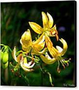 Tiger Lily Canvas Print by Tammy Wallace