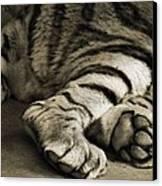 Tiger Paws Canvas Print