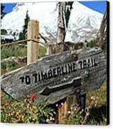 Timberline Trail Canvas Print by Cari Gesch