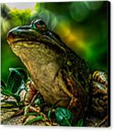 Time Spent With The Frog Canvas Print