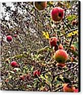 Time To Pick The Apples Canvas Print