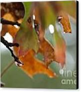 Tiny Leaf Canvas Print