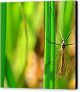Tipula Canvas Print by Tommytechno Sweden