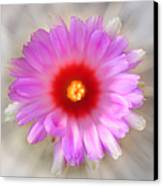 To Return To Innocence. Cactus Flower Canvas Print by Jenny Rainbow
