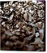Toasty Coconut Canvas Print by John Grace
