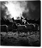 Tomales Bay Harem Under The Midnight Moon - 7d21241 - Black And White Canvas Print by Wingsdomain Art and Photography
