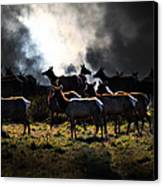 Tomales Bay Harem Under The Midnight Moon - 7d21241 Canvas Print by Wingsdomain Art and Photography