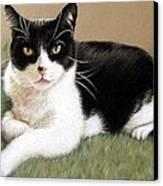 Tomcat Baloo Canvas Print