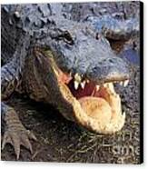 Toothy Grin Canvas Print by Adam Jewell