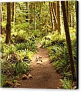 Trail Through The Rainforest Canvas Print by Carol Groenen