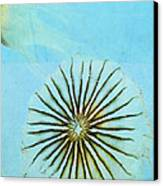 Transparent-sea Canvas Print