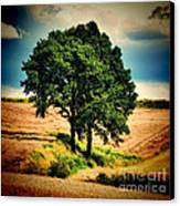 Tree Alone Canvas Print by Boon Mee
