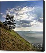 Tree And Misty Landscape Canvas Print