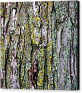 Tree Bark Detail Study Canvas Print by Design Turnpike