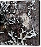 Tree Bark Fungi Canvas Print by Steven Valkenberg