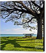 Tree Canopy Canvas Print