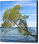 Tree Canvas Print by Charline Xia