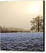 Tree In A Field On A Snowy Day Canvas Print by Fizzy Image