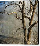 Tree In Winter Canvas Print by Lois Bryan