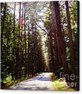 Tree Lined Road Canvas Print by Crystal Joy Photography