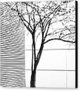 Tree Lines Canvas Print by Darryl Dalton