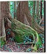 Tree Roots Tropical Rainforest Canvas Print by Dirk Ercken