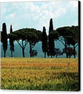 Tree Row In Tuscany Canvas Print by Heiko Koehrer-Wagner