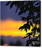 Tree Silhouette Over Sunset Canvas Print
