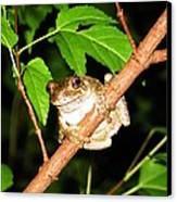 Tree Toad Night Canvas Print by Tamara Stickler