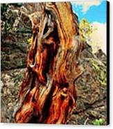 Tree Trunk Canvas Print by Kathleen Struckle