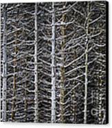 Tree Trunks In Winter Canvas Print by Elena Elisseeva