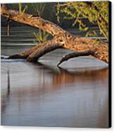 Tree Wash Canvas Print by Theo O Connor