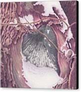Treeheart Canvas Print by Elizabeth Dobbs