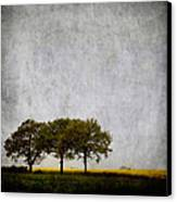 Trees At Sunrise Canvas Print by Carol Leigh