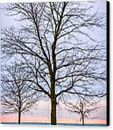 Trees At The Boardwalk In Toronto Canvas Print by Elena Elisseeva