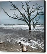 Trees In Surf Canvas Print by Steven Ainsworth