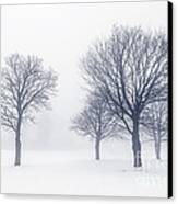 Trees In Winter Fog Canvas Print by Elena Elisseeva