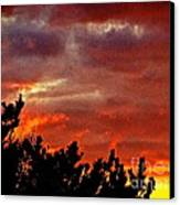 Trees Knowing The Sky Canvas Print by Q's House of Art ArtandFinePhotography
