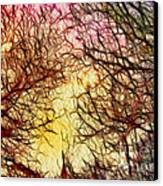 Trees Of The Four Seasons Canvas Print